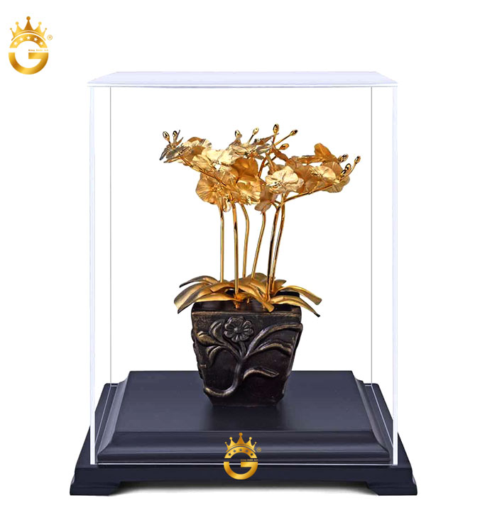 Chậu cây lan vàng 24k, mẫu quà tặng cây mai ý nghĩa
